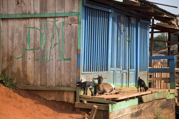 Foto de Goats at a closed store in LibongoYokadouma - Camerún