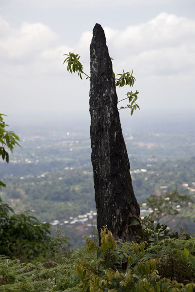 One of the pinnacles on Mount Eloundem | Mount Eloundem | Cameroon