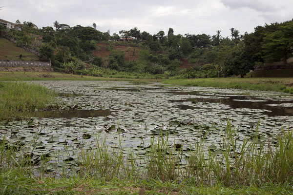 Picture of Municipal Lake (Cameroon): Waterflowers covering the pond on the western side of the Municipal lake