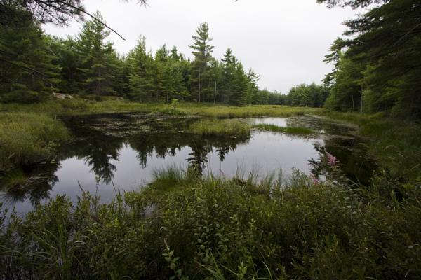 Small pond in the northern part of Beausoleil Island | Beausoleil Island | Canada