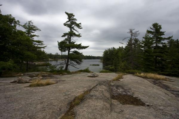 Foto de Canada (Rocks and trees: the prevalent landscape of Beausoleil Island)