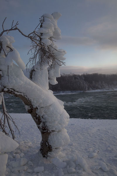 Thick layer of ice covering a tree at the top of the American Falls | Cascate del Niagara gelate | Canada