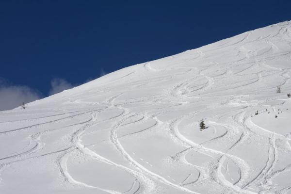 Picture of Lake Louise skiing (Canada): Skiers and boarders left their marks on this slope with fresh snow