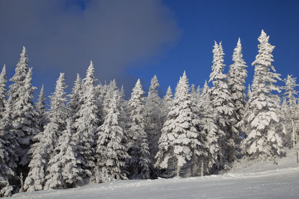 Snow-making cloud above snow-covered trees on Mont Tremblant | Mount Tremblant Skiing | Canada