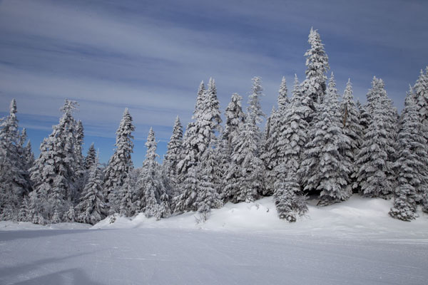 Snow-covered trees on the slopes of Mont Tremblant | Mount Tremblant Skiing | Canada