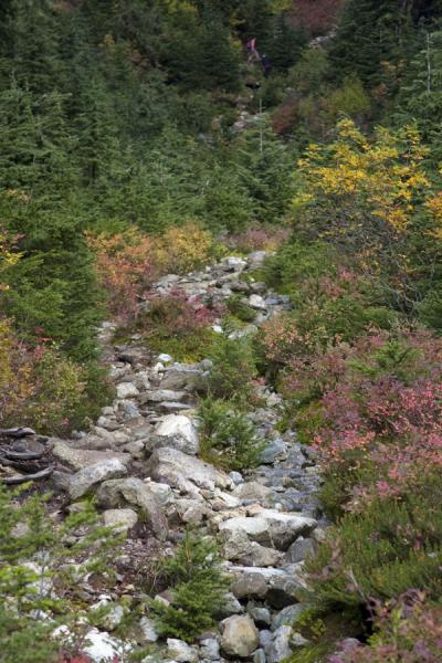 Rocky trail at lower altitude on Mount Seymour | Mount Seymour | Canada