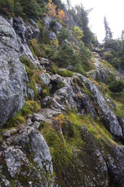 Picture of Rocky trail on Mount Seymour
