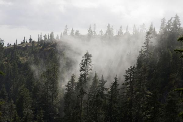 Clouds lifting from the forest on the slopes of Mount Seymour | Mount Seymour | Canada