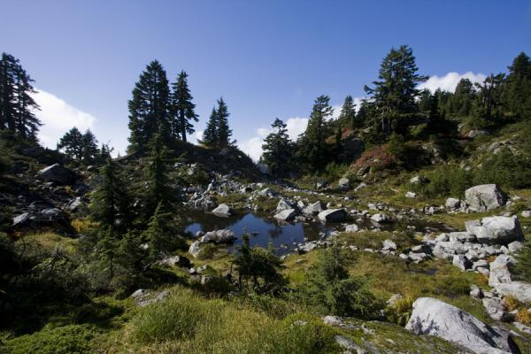 Small lake near the summit of Mount Seymour | Mount Seymour | Canada