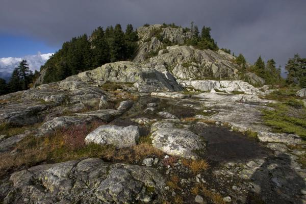 Picture of Rocks and trees: typical scene of the Mount Seymour hike