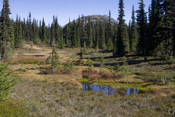 Picture of Panorama Ridge (Canada): View of Taylor Meadows