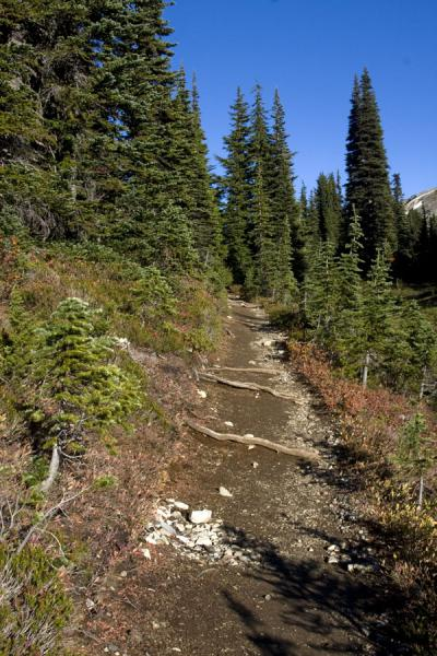Picture of Panorama Ridge (Canada): Hiking trail leading through the Taylor Meadows