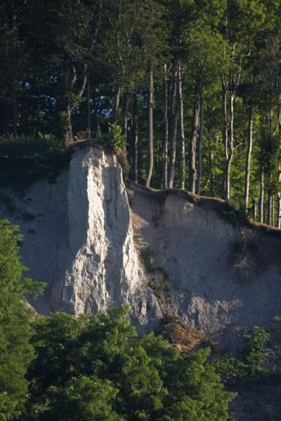 Trees precariously standing on the edge of the Cathedral Bluffs | Riscos de Scarborough | Canada