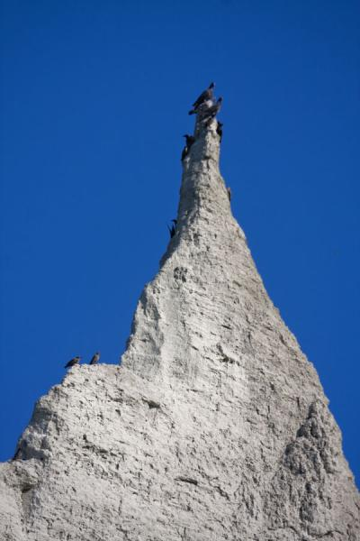 Picture of Scarborough Bluffs (Canada): Birds on top of a pointed tower of the Scarborough Bluffs