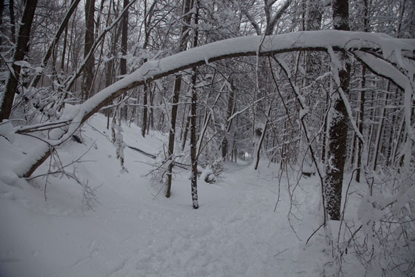 Photo de Trail through the woods and snow of Mont RoyalAller à raquettes à Montréal - le Canada