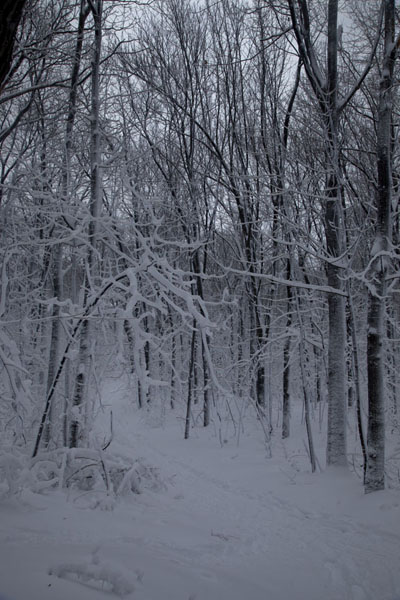 Foto di Trail through snowy forest on top of Mont Royal - Canada - America
