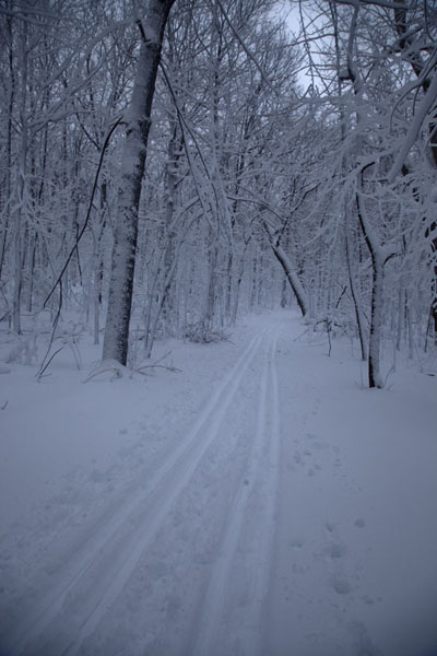 Photo de Crosscountry ski trail through the woods on Mont RoyalAller à raquettes à Montréal - le Canada