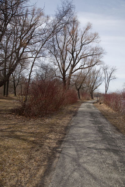Foto van Trees lining one of the many paths over Centre Island - Canada - Amerika