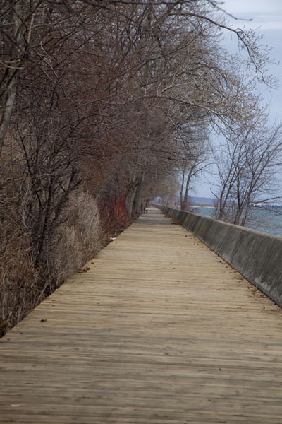 Foto van Boardwalk lined with trees on the southern side of Centre Island - Canada - Amerika