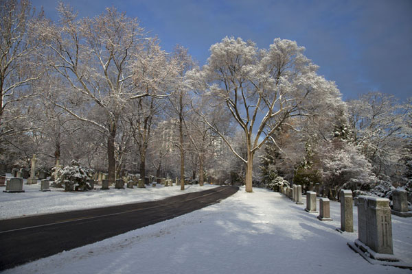 Picture of Snow covered trees in Mount Pleasant Cemetery