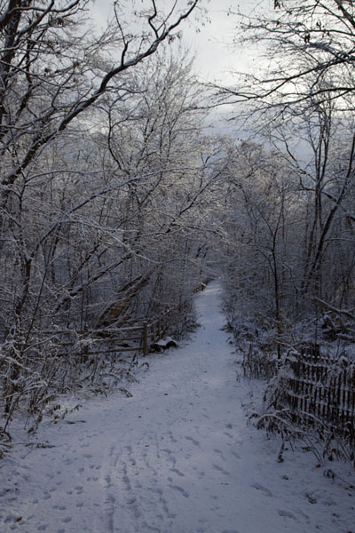 Picture of Snow-covered trail into Moore Park ravine