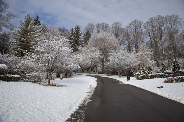 Picture of Toronto Ravine Walk (Canada): Trees with snow in Mount Pleasant cemetery