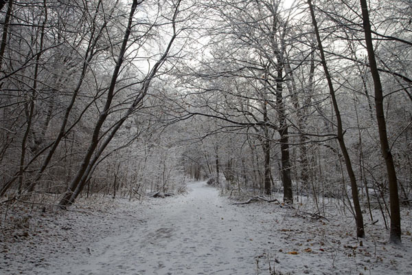 Foto di Snowy trail through Park Drive ravineToronto Ravine Walk - Canada
