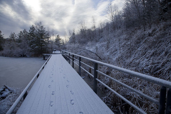 Foto de Snow-covered boardwalk over a pond near Don Valley Brickworks - Canada - América