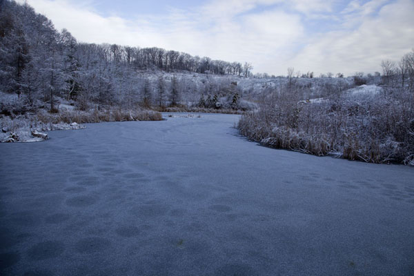 Picture of Toronto Ravine Walk (Canada): Ice-covered pond at Don Valley Brickworks