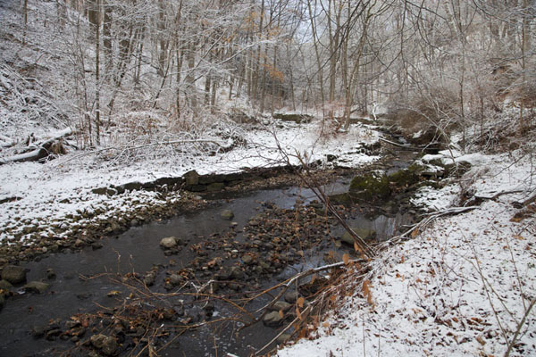 Picture of Toronto Ravine Walk (Canada): The Vale of Avoca ravine with creek running through the snow-covered landscape