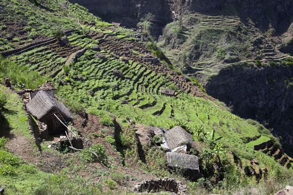 Looking down on the terraced fields with houses at the upper part of Chã de Pedra | Coculi to Rabo Curto hike | Cape Verde
