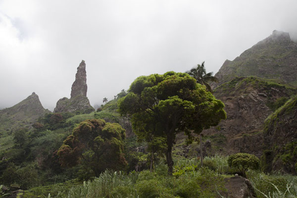 Picture of Coculi to Rabo Curto hike (Cape Verde): The landscape of Ribeira de Torre with trees and volcanic peaks