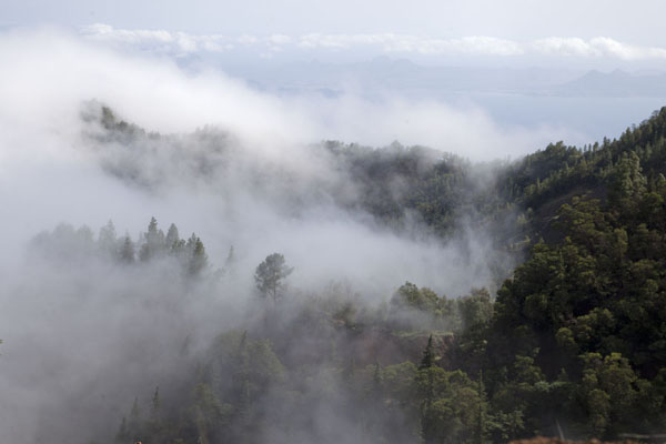 Clouds moving over the forest around Cova - 维德角群岛