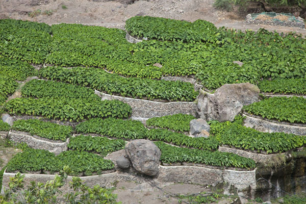 Agriculture in the valley east of Tarrafal | Tarrafal | Cape Verde