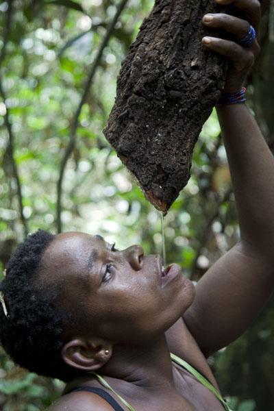 Picture of BaAka pygmy woman showing how to drink from a lianaBayanga - Central African Republic