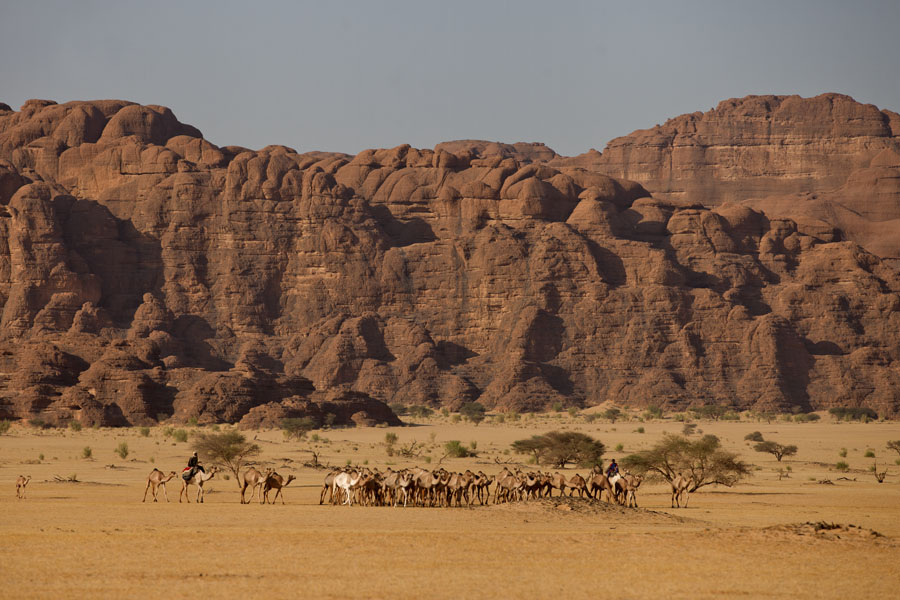 Picture of Abaike Tassili (Chad): Herdsman with camels with rocky mountains close to Abaike Tassili