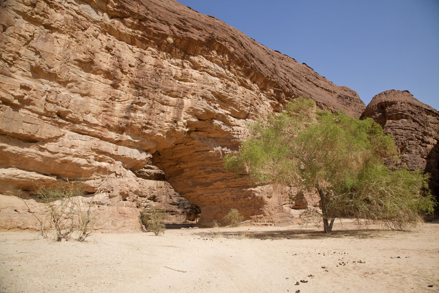 Picture of Terkei amphitheatre west (Chad): Tree in front of arch at the west side of the Terkei massif