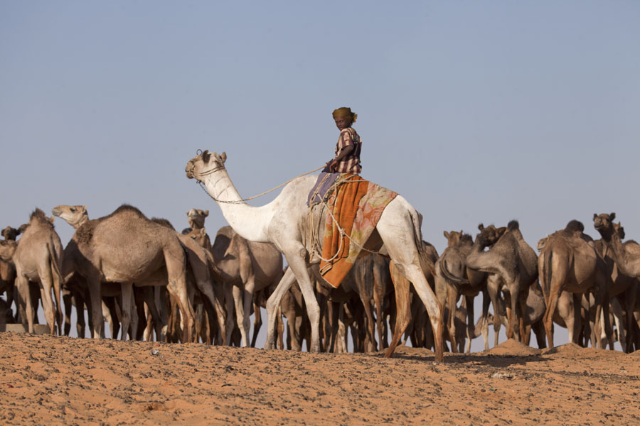 Foto van Young boy on a camel at a deep well in northern Chad - Tsjaad - Afrika