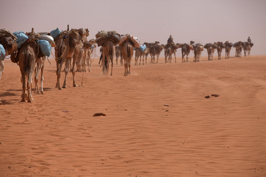 Foto van Caravan of camels marching through the desert near Eyo demiEyo demi - Tsjaad