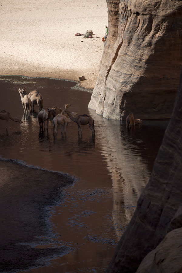 Photo de Camels in the Guelta d'ArcheïGuelta d'Archeï - Tchad