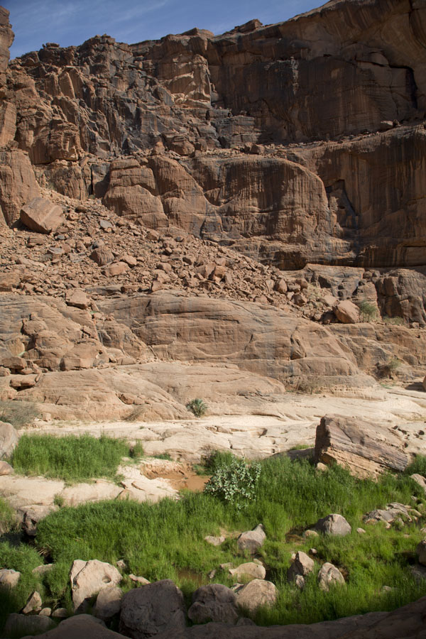 The vertical walls of the canyon with vegetation in the foreground | Guelta d'Archeï | Chad