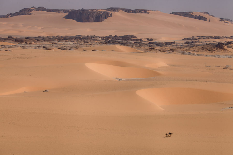Photo de Camels appearing small in the grand scenery of the desert - Tchad - Afrique
