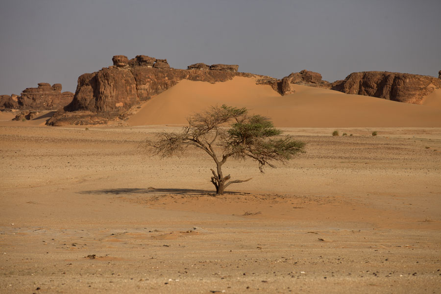 Lone tree in front of sand dunes on rocky mountains | Koraa | Chad