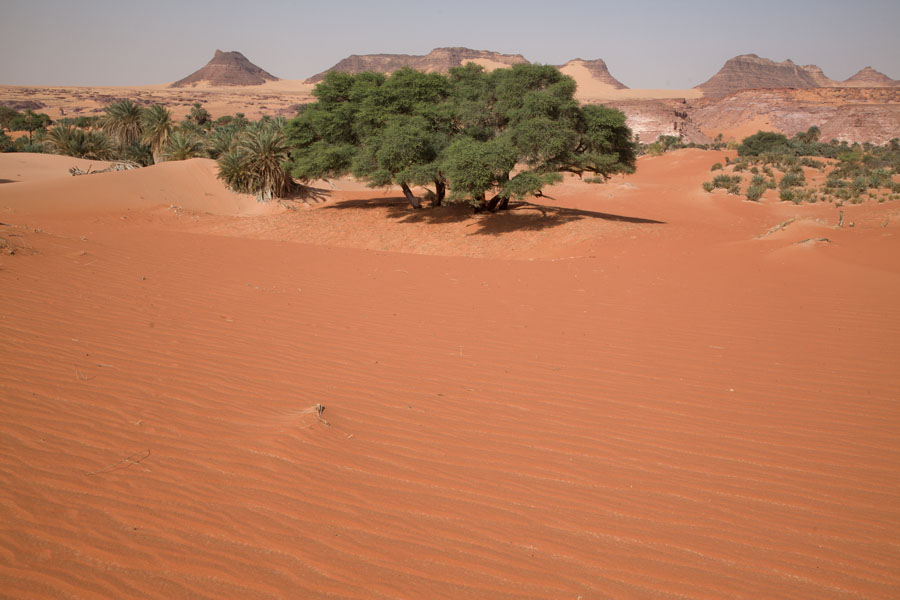 Foto van Sand with trees near a salt lake of TeguedeiTeguedei - Tsjaad