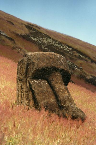 Half hidden statue on Easter Island | 伊斯特岛 | 智利
