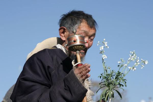 Picture of Barkhor kora (China): Old Tibetan with typical prayer wheel and flowers on the Barkhor kora