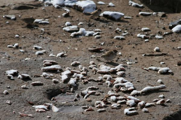 Small birds nibbling remains at Batang sky burial site | Batang hemelbegrafenis | China