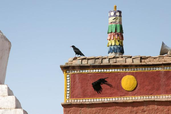 Picture of Batang sky burial (China): Crow on roof of a buildling at the Batang sky burial site