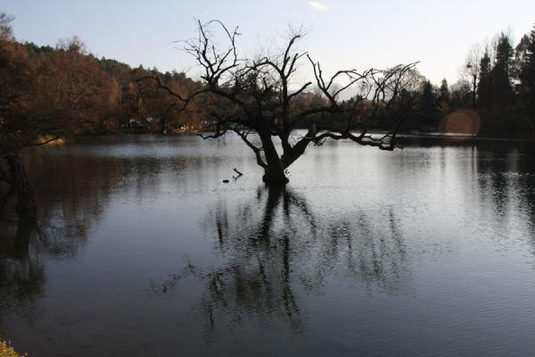Picture of Tree and reflection in the Yuyuan, the Black Dragon Pool