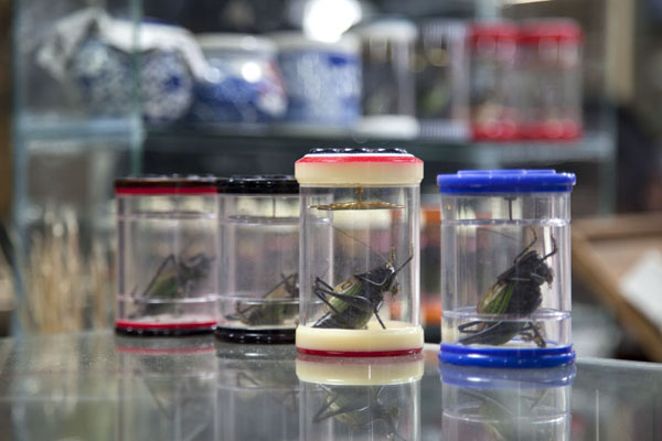 Transparent cilinders with crickets at one of the many insect stalls at the market | Shanghai | China